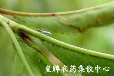 首页 病虫草害防治 病虫害图库 果树虫害 核果类 桃树  &